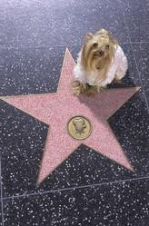 chien walk of fame