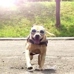 un chien Yamakasi