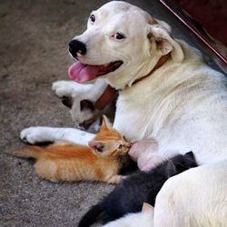 chienne nourrit chatons orphelins