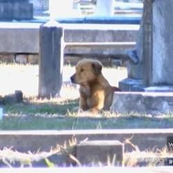 une chienne errante refuse de quitter le cadavre de son petit