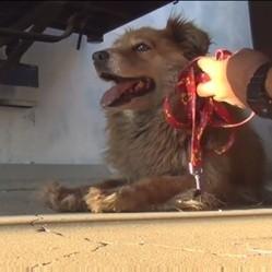 le sauvetage d'une chienne errante
