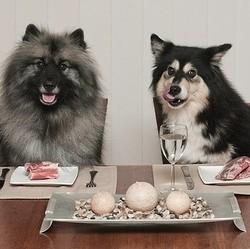 chiens à table