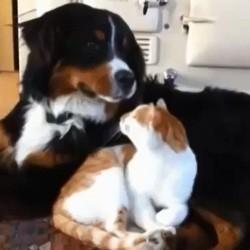 des chiens tentent de devenir avec des chats
