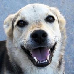 santé du chien dents