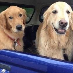 un chien sauve son frère perdu