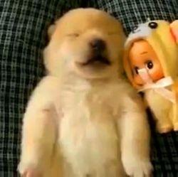 rêves chiens video wamiz