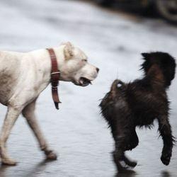 deux chiens errants en Chine