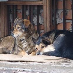 chiens errants moscou empoisonnement
