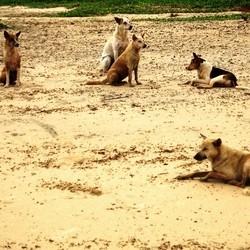 chien errant rage inde
