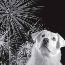 chiens et feux d'artifice