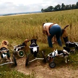chiens handicapés