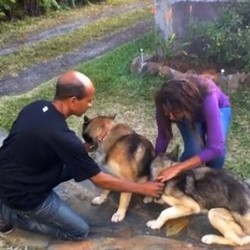 un chien fugueur s'échappe d'un refuge de la SPA pour retrouver son frère