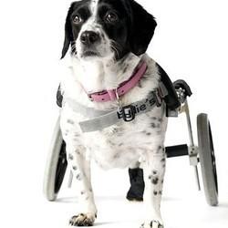 animaux handicapés