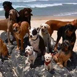 des chiens et un chat jouent sur la plage