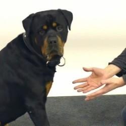 vidéo chien magie