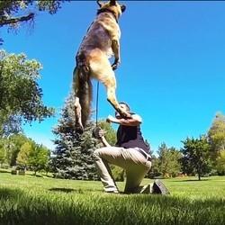 chien filmé au ralenti