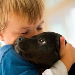 le chien, un remède à nos maladies