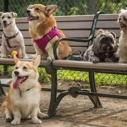 Villes Dog Friendly