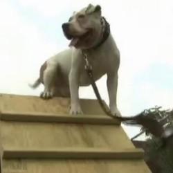 des chiens aident des soldats