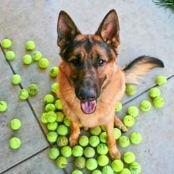 top 20 races de chiens