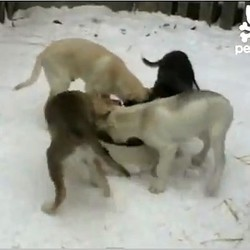 chiens mangent gamelle video