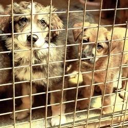 des chiens maltraités sauvés dans un élevage
