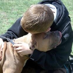 chien ressent tristesse homme