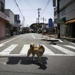 fukushima zone interdite chiens sauvages