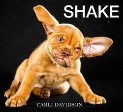 un chien qui s'ébroue