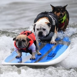 chien surf sport canin