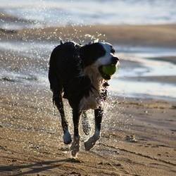 voyager avec son chien accessoires séjour serein