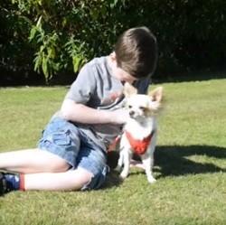 Chihuahua et enfant