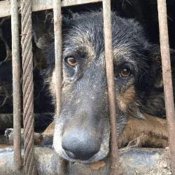 Camion trafic de chiens en Chine