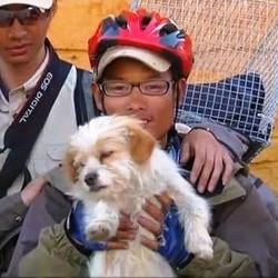 chine chien errant cyclistes