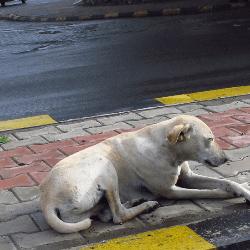 chien errant sur le bord de la route