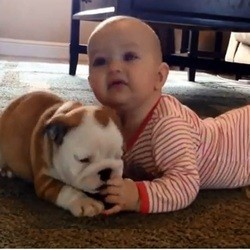 un chiot bulldog et un bébé