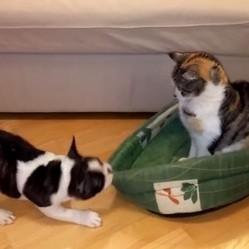 un chat vole le panioer d'un chiot