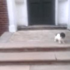 chiot et escaliers