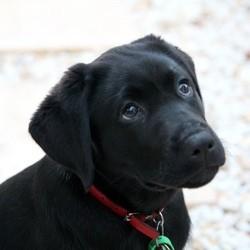 nom de chien en I 2013