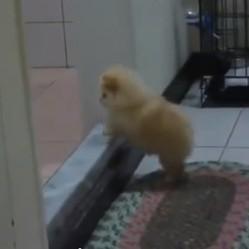 un chiot tente de monter une marche