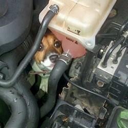 Chien pris au piège dans un moteur