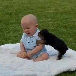 B b chien contre b b humain vid o du jour vid os wamiz - Image bebe chien ...
