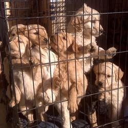 Chiots cage trafic
