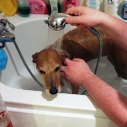choisir shampoing chien