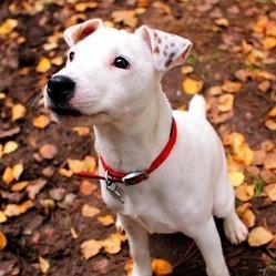choisir le collier pour chien