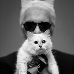 Choupette, Karl Lagerfeld