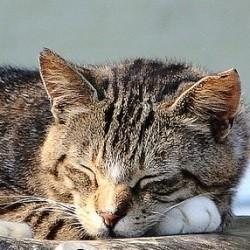 chat femme france Arras