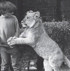 Un lion nommé Christian