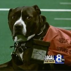 un chien de service reçoit le diplôme de son maître