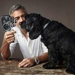 george clooney et son chien einstein